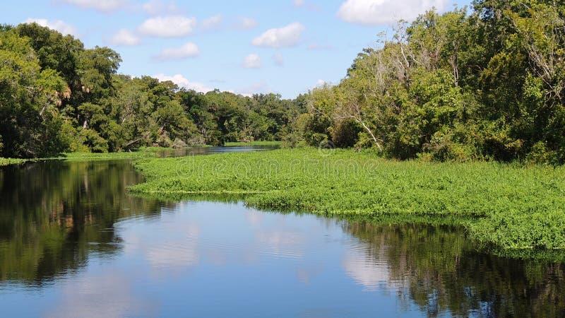 阿斯特佛罗里达圣约翰斯河反射 免版税库存图片
