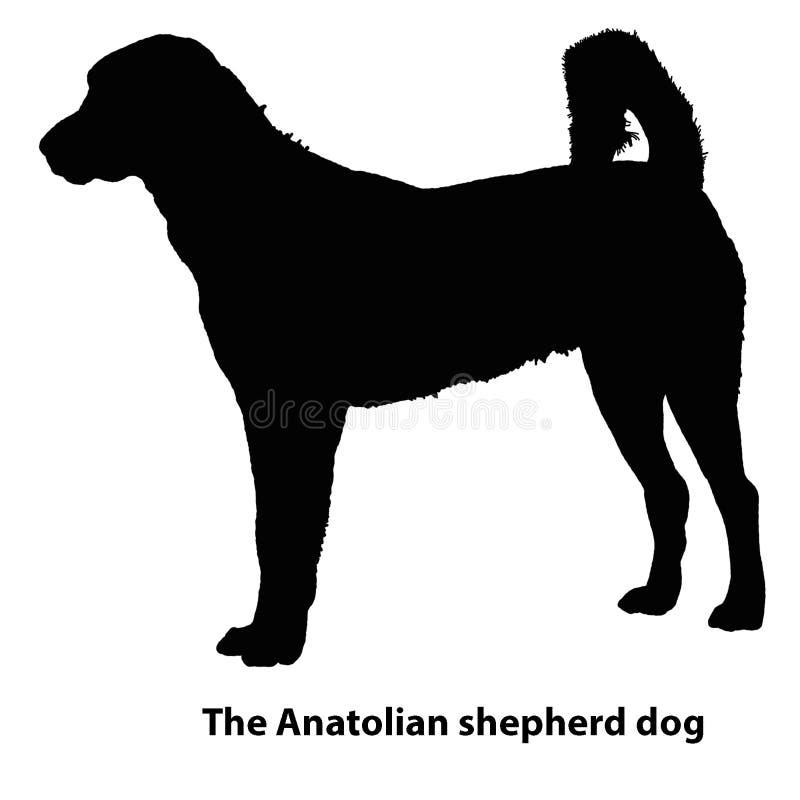 阿纳托利安牧羊犬不同的品种,剪影传染媒介套  向量例证