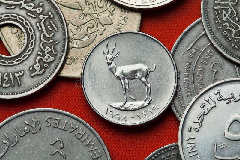 阿联酋的硬币 沙子瞪羚 库存照片