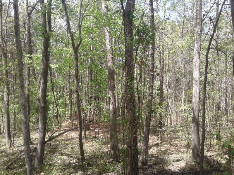 阿肯色森林 库存照片
