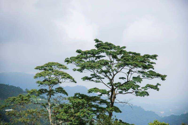 阿里山林冠层 图库摄影