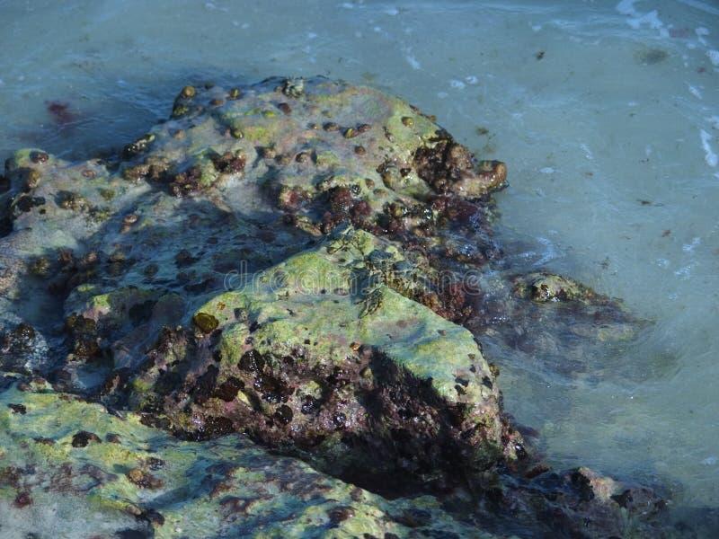 阿鲁巴海岸线 库存图片