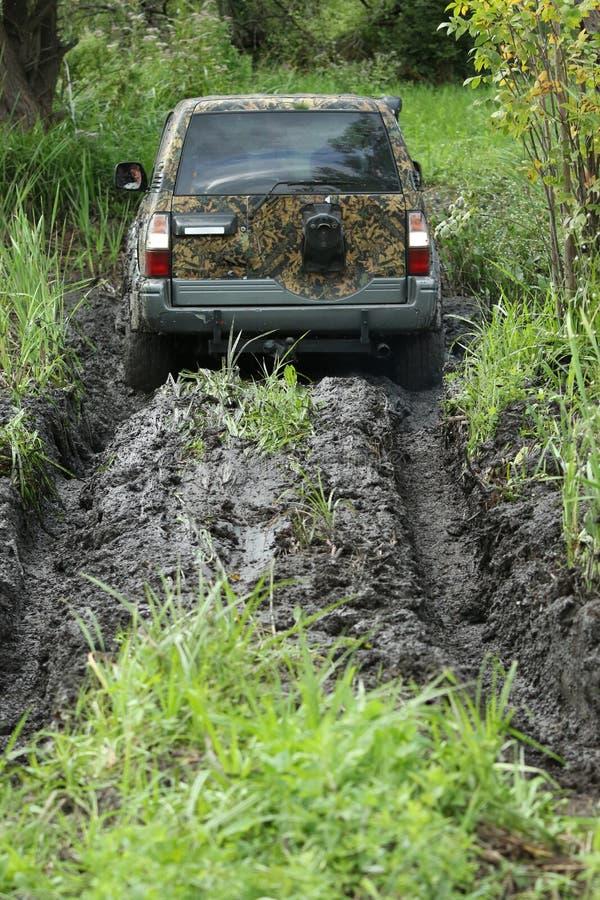 黏附在沼泽 库存照片