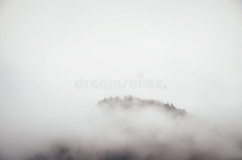 黏附在雾外面的树上面  简单派本质上 免版税图库摄影