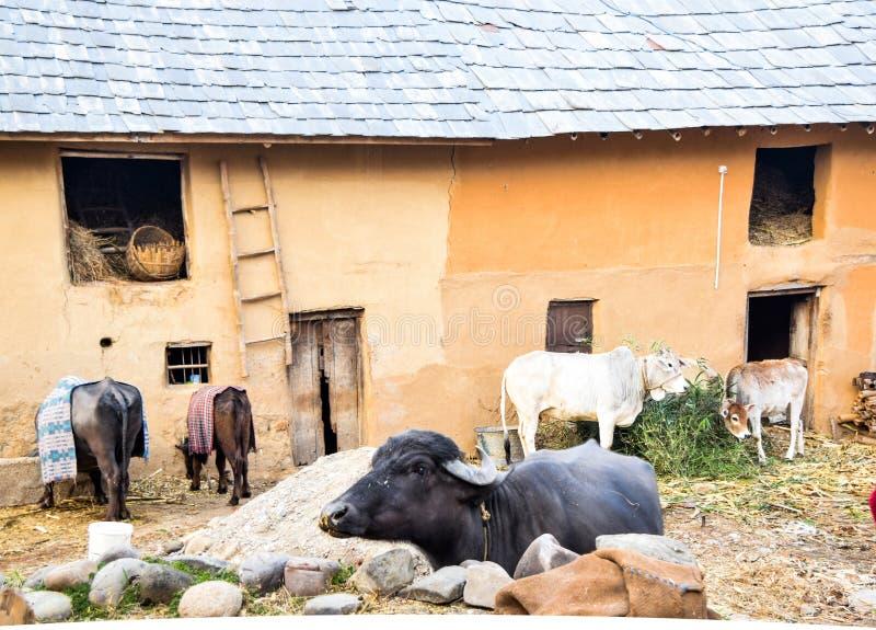 附带牛棚子的泥议院 免版税库存图片图片