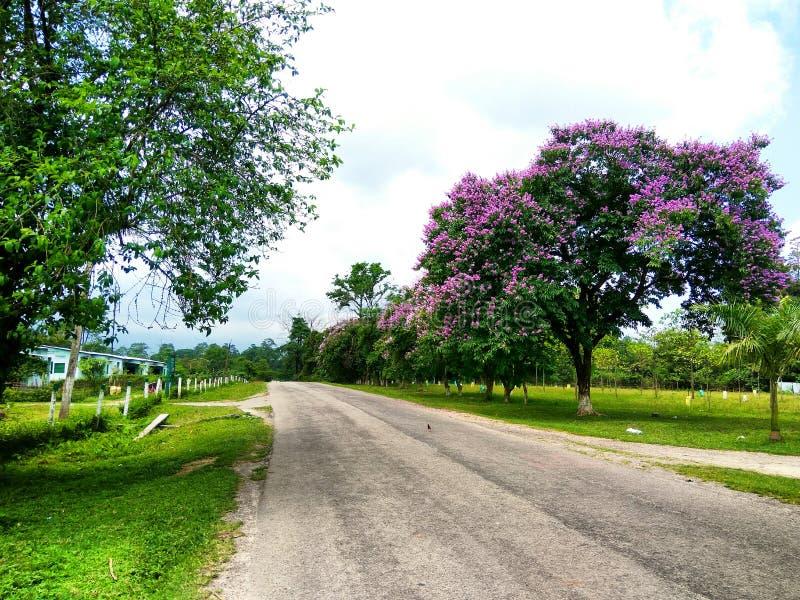 附近美丽的树路 免版税库存图片
