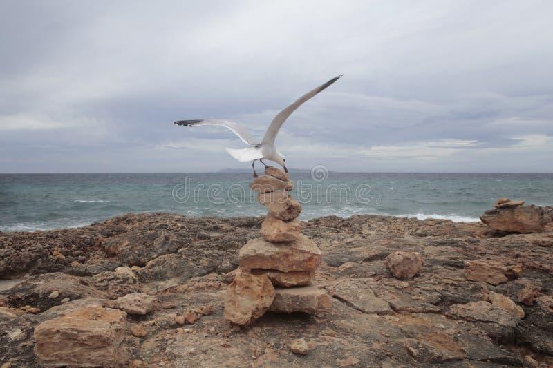 登陆在majorca海岛的南海岸的石土墩的海鸥  免版税库存照片