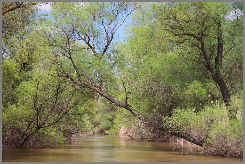 降低伸手可及的距离河伏尔加河 图库摄影