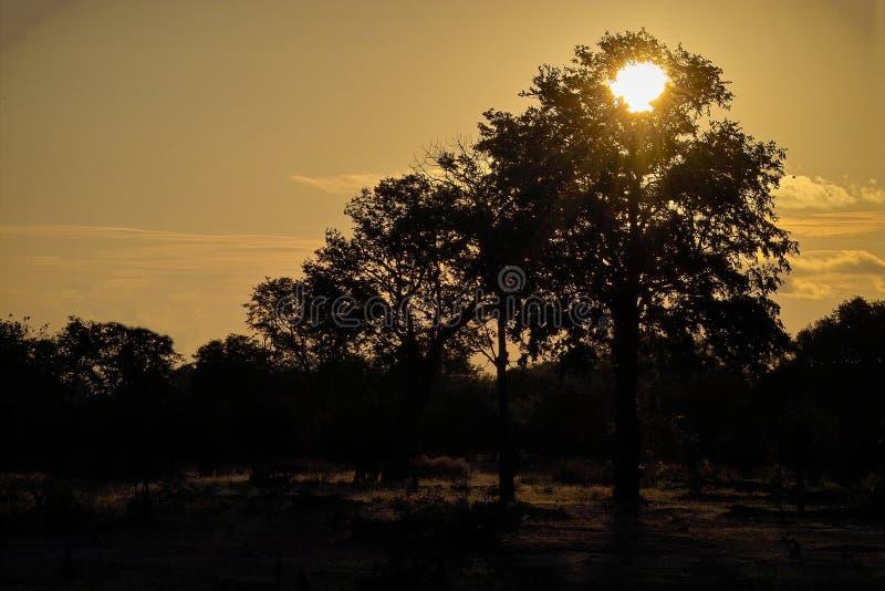 降低落日赞比西河 库存图片