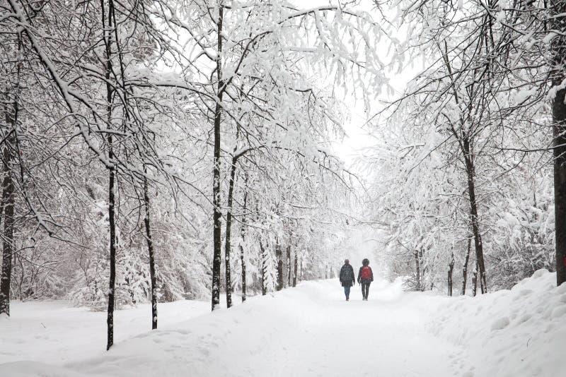 降雪在公园,多雪的冬天路,积雪的树环境美化 冷的季节天气概念 免版税图库摄影