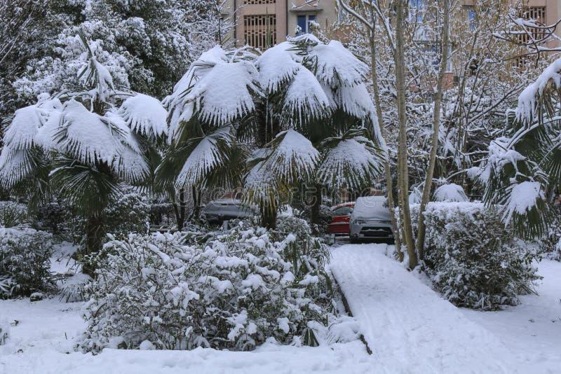 降雪在公园 在雪下的棕榈树在显著地冷气候 图库摄影
