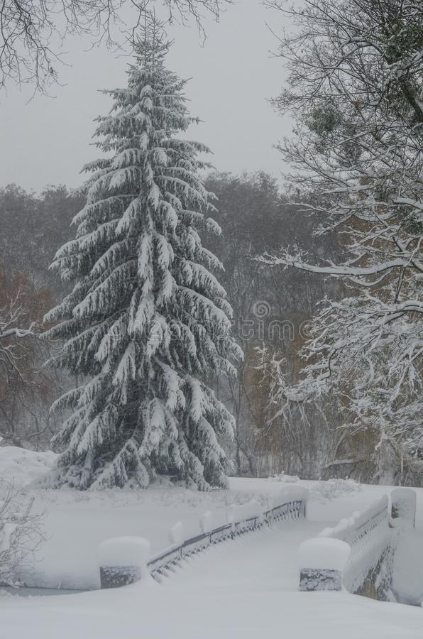 降雪在公园 免版税库存照片