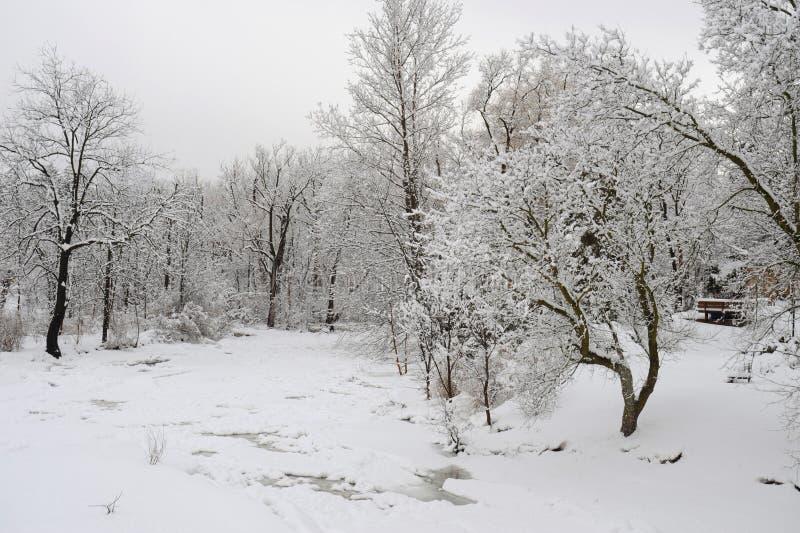 降雪在公园 图库摄影