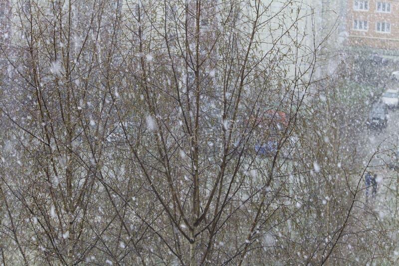 降雪在早期的春天 免版税库存图片