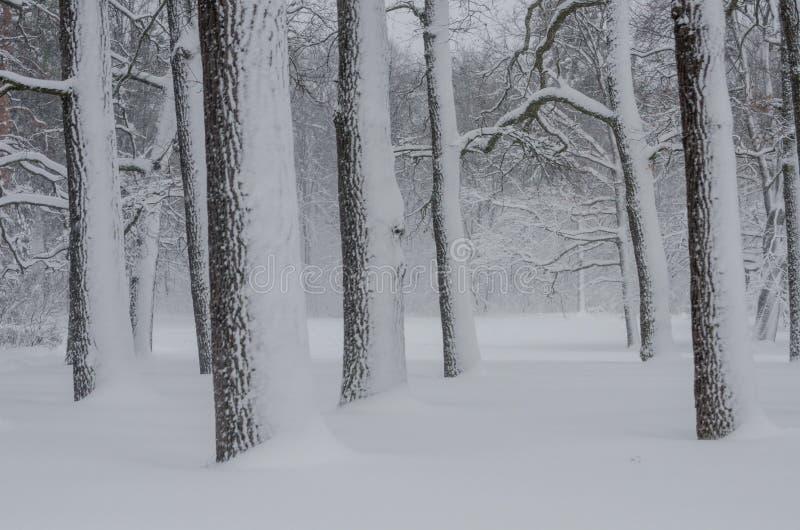 降雪在森林里 库存照片