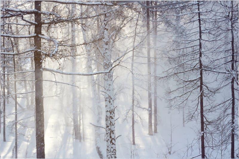 降雪在森林里 免版税库存图片