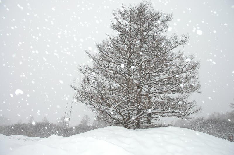 降雪的冬天 库存照片