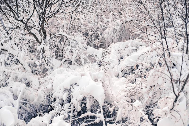 降雪的风暴在地拉纳在2017年1月 免版税库存图片