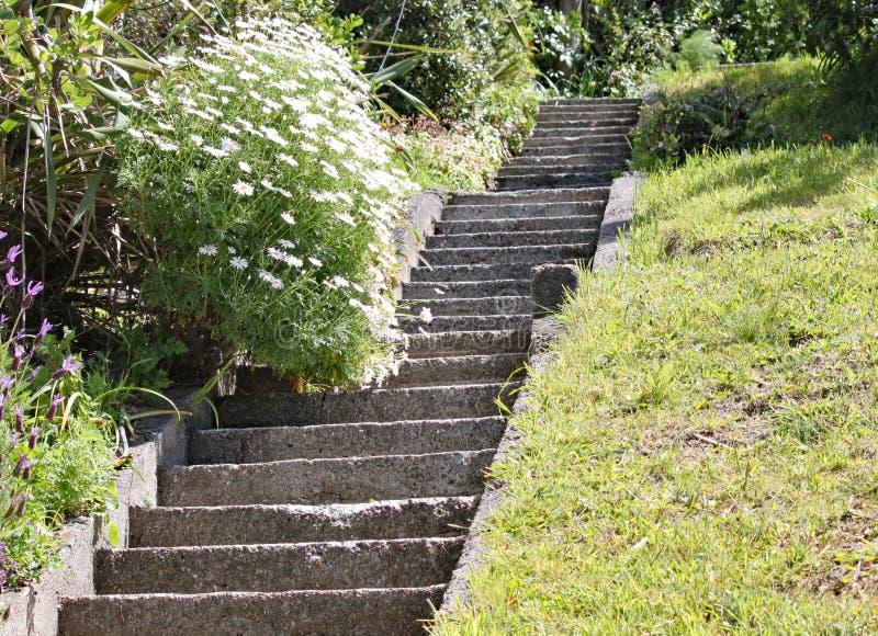 陡峭的具体步鄹在一个庭院里在惠灵顿,新西兰 其中一乐趣居住在陡峭的小山顶部 免版税库存图片