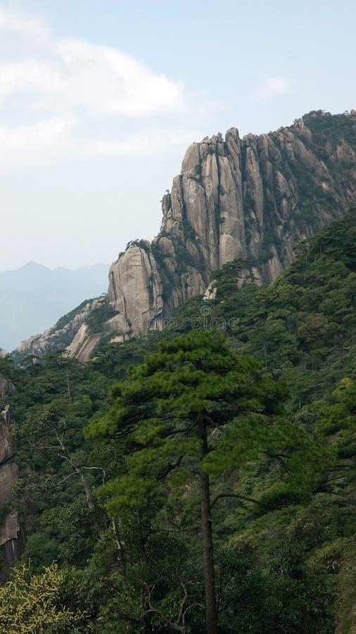 陡峭的小山和杉木 免版税库存图片