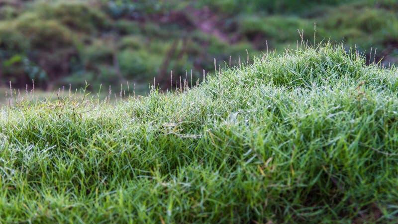 陡峭的象草的小山 库存照片