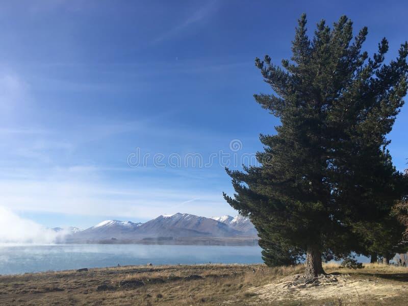 除湖以外的树 库存照片