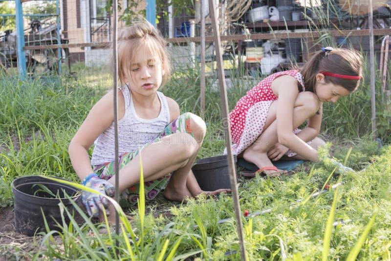 除草庭院的两个十几岁的女孩的特写镜头图象供住宿 女性从事园艺的除草杂草厂草在葱关闭菜床上  库存照片