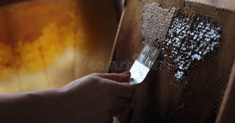 去除蜡的蜂蜜收获 免版税库存照片