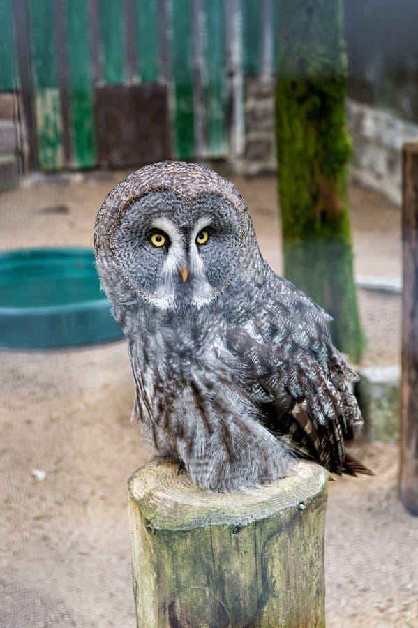 除鸟外,救自己 与大眼睛和鹰额嘴的逗人喜爱的猫头鹰鸟 在动物园笼子栖息的猫头鹰鸟 牺牲者鸟  库存图片
