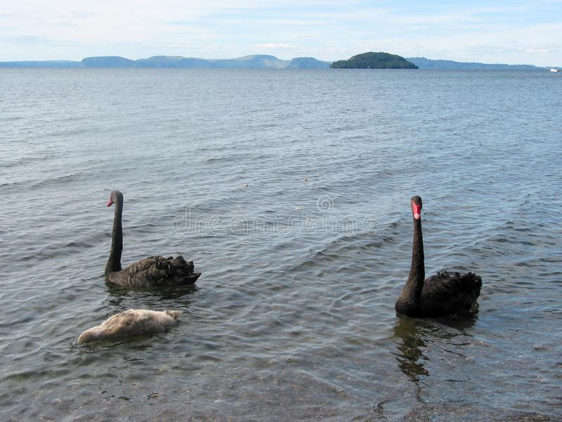 陶波湖和Huka秋天 r 库存照片
