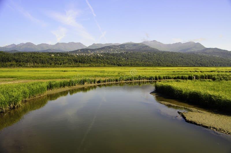 陶瓷工沼泽在阿拉斯加 免版税库存图片