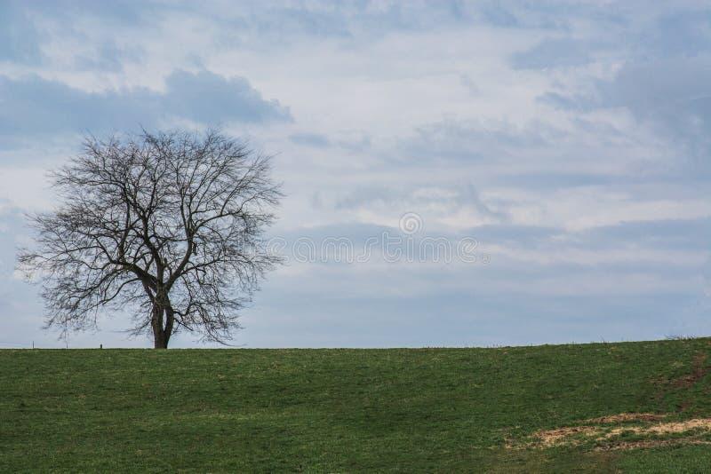 隆娜特里在肯塔基中部 免版税图库摄影
