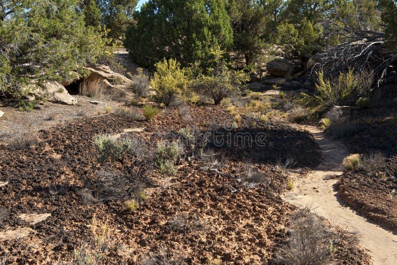 隐生的土壤 免版税库存图片