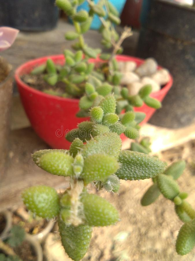 隐花的植物 库存图片