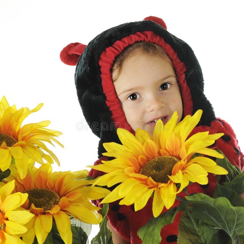 隐藏在向日葵之中 免版税库存图片