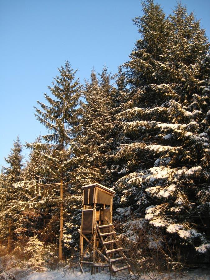 隐藏被上升的冬天 库存图片