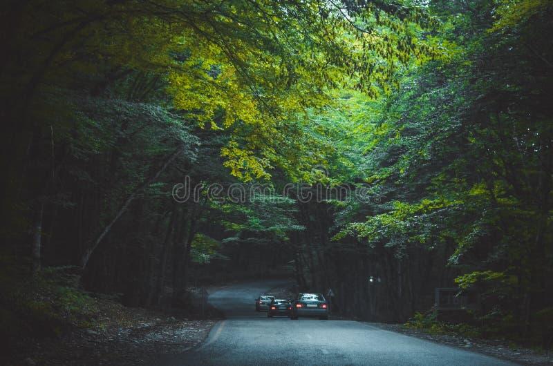 隧道在森林里 免版税库存图片