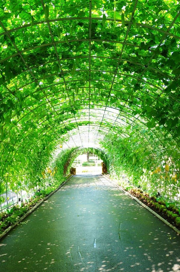 Download 隧道蔬菜 库存照片. 图片 包括有 秋天, 健康, 绿色, 生活, 抽象, 圈子, 有机, 市场, 艺术 - 22353542