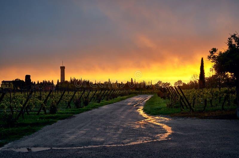 难以置信的火热的日落在卢加诺葡萄园里 图库摄影