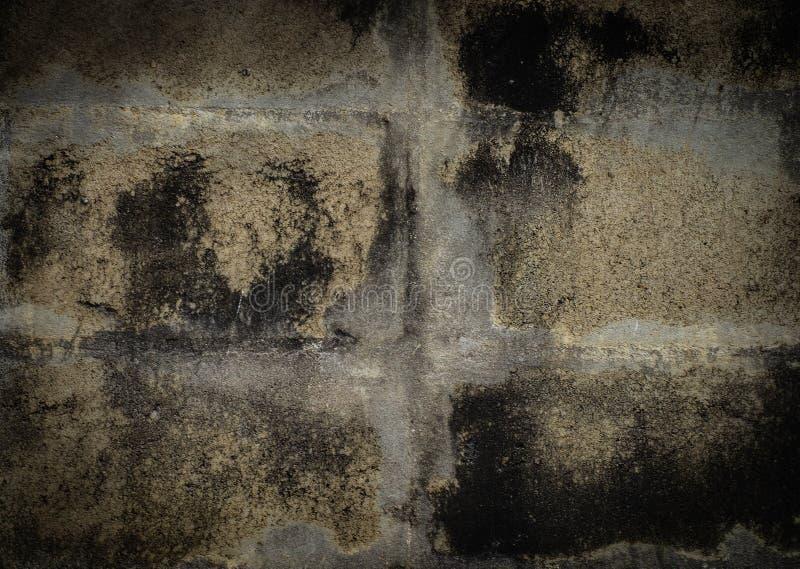 难看的东西混凝土,在混凝土墙上的地衣 免版税库存照片