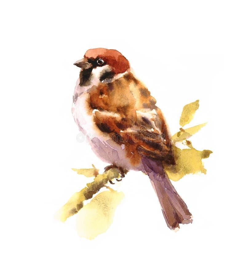 麻雀水彩鸟坐在白色背景与叶子例证手拉的一个分支隔绝的 向量例证