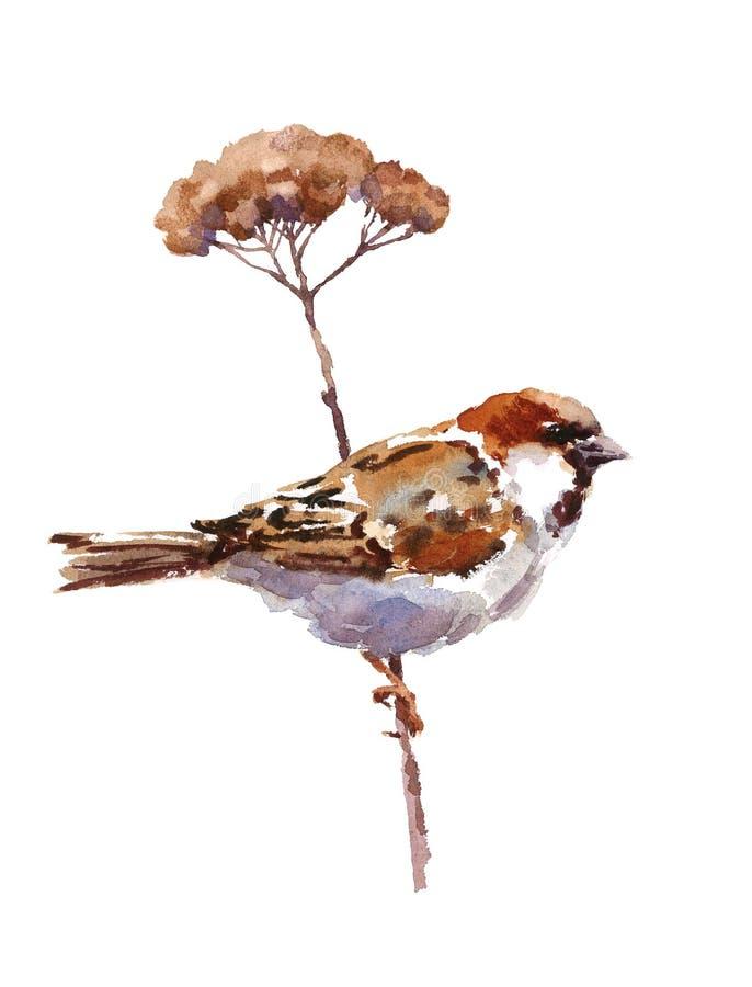 麻雀水彩鸟坐在白色背景隔绝的分支例证手拉