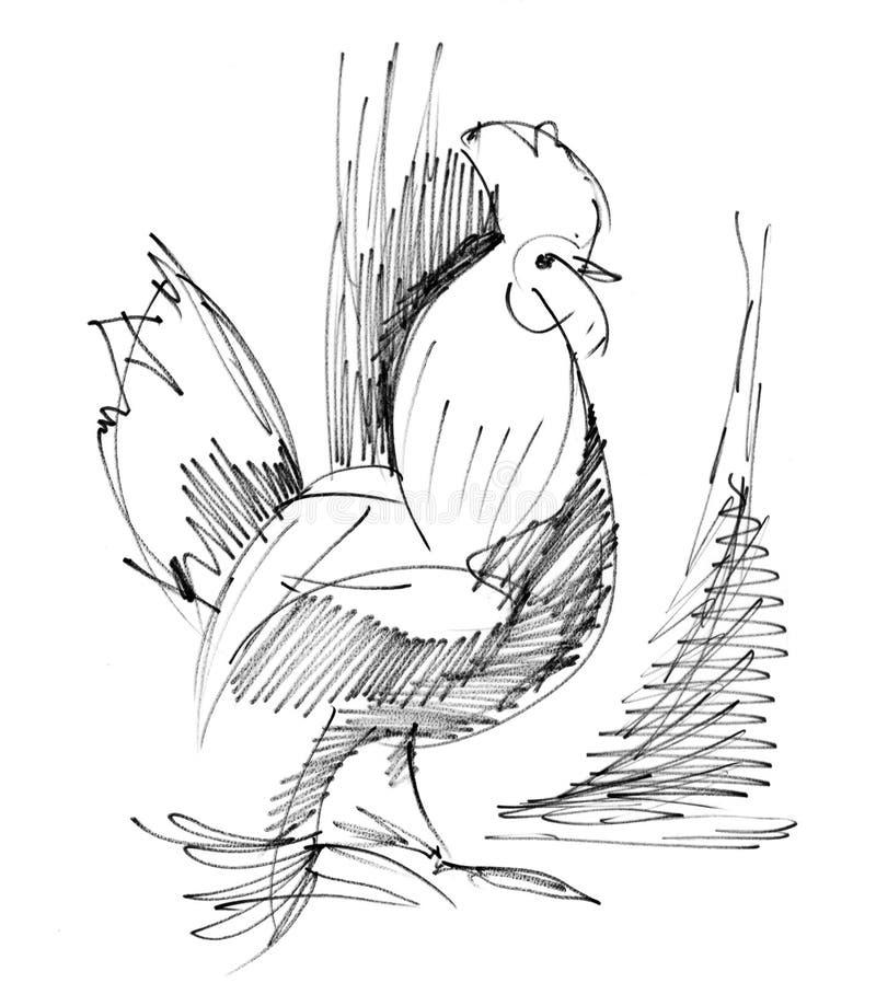 雄鸡草图 库存照片
