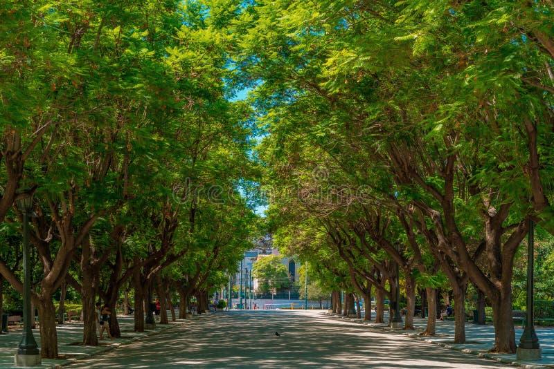 雅典国民庭院 库存照片
