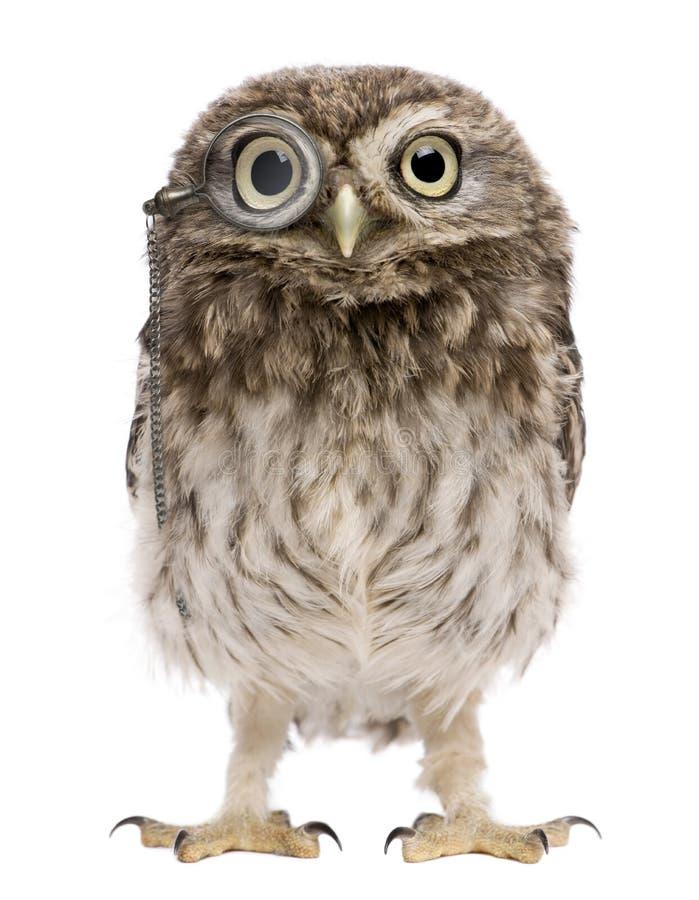 雅典娜玻璃一点扩大化的小猫头鹰猫&# 免版税库存照片