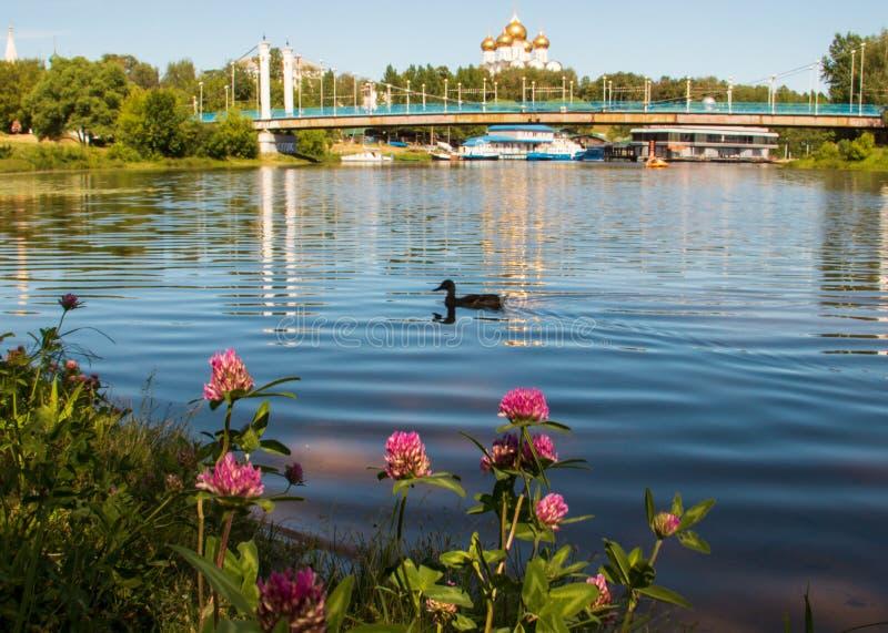 雅罗斯拉夫尔 红三叶草,位于科托罗斯河岸,对面是美丽的斜拉桥,通往达曼斯基岛, 库存图片