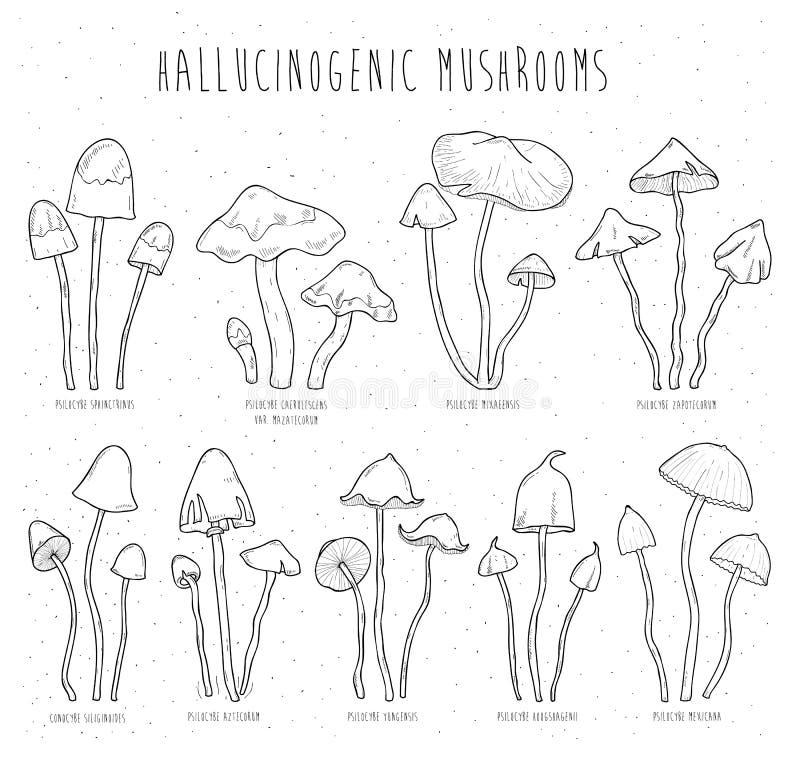 集合引起幻觉的蘑菇 库存例证