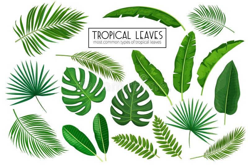 集合热带叶子 库存例证
