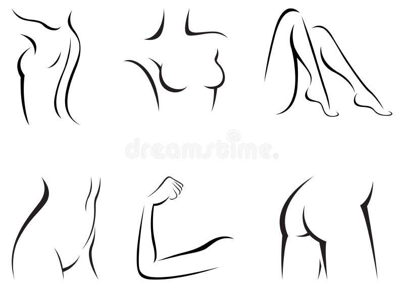 集合风格化女性身体零件 库存例证