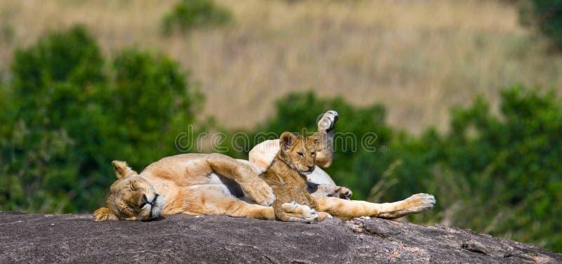 雌狮和她的崽在一个大岩石 国家公园 肯尼亚 坦桑尼亚 mara马塞语 serengeti 免版税库存图片